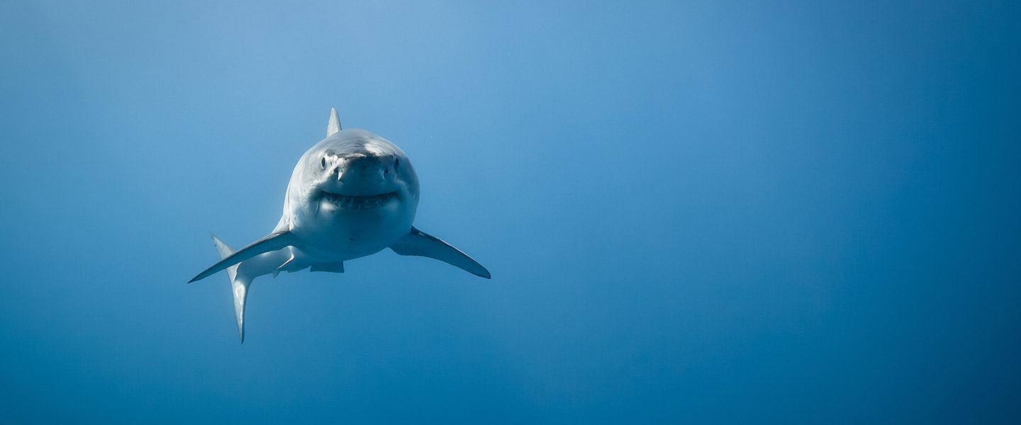 Sharks on Cape Cod: Just how scared should we be? - The