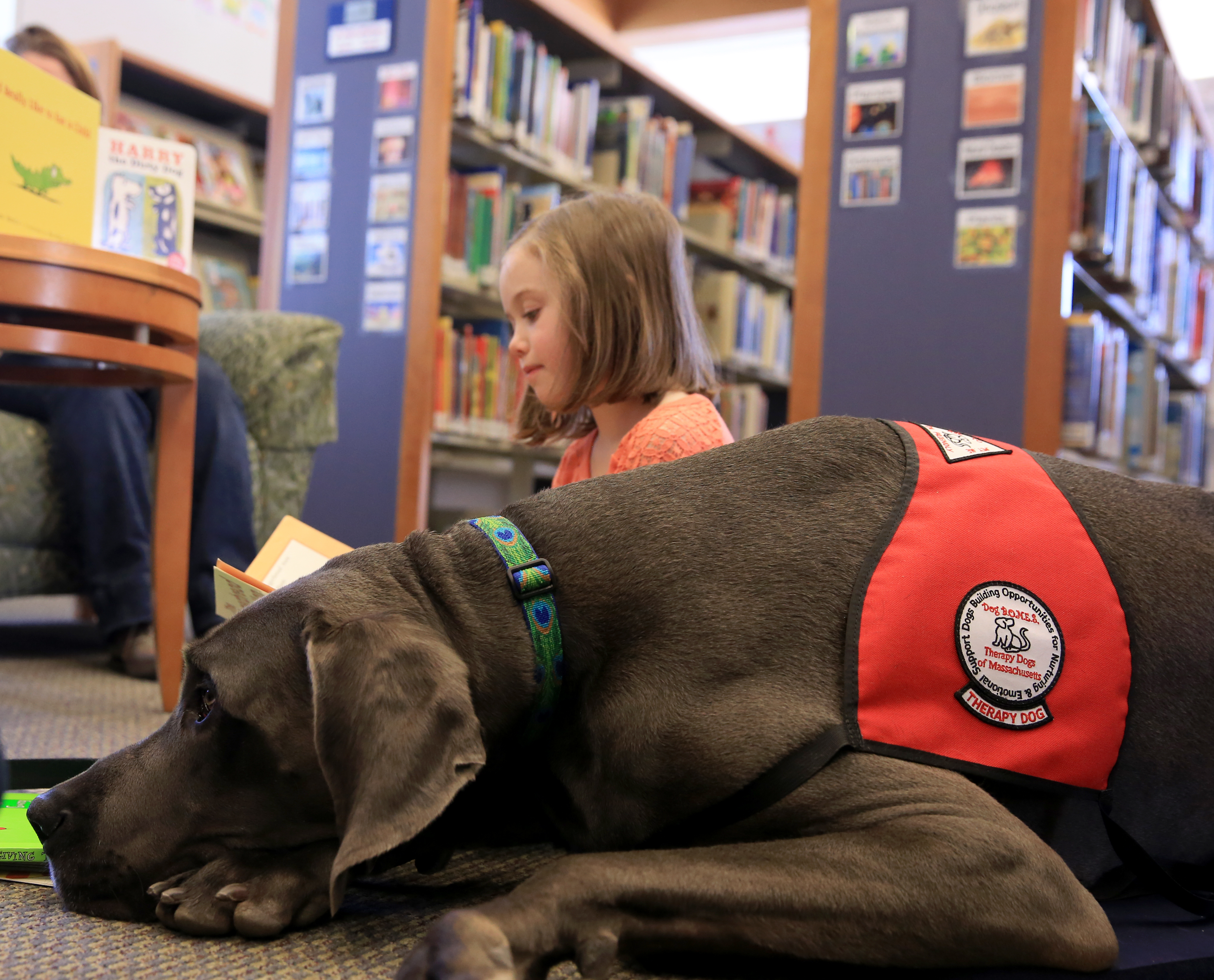 When reading goes to the dogs - The Boston Globe