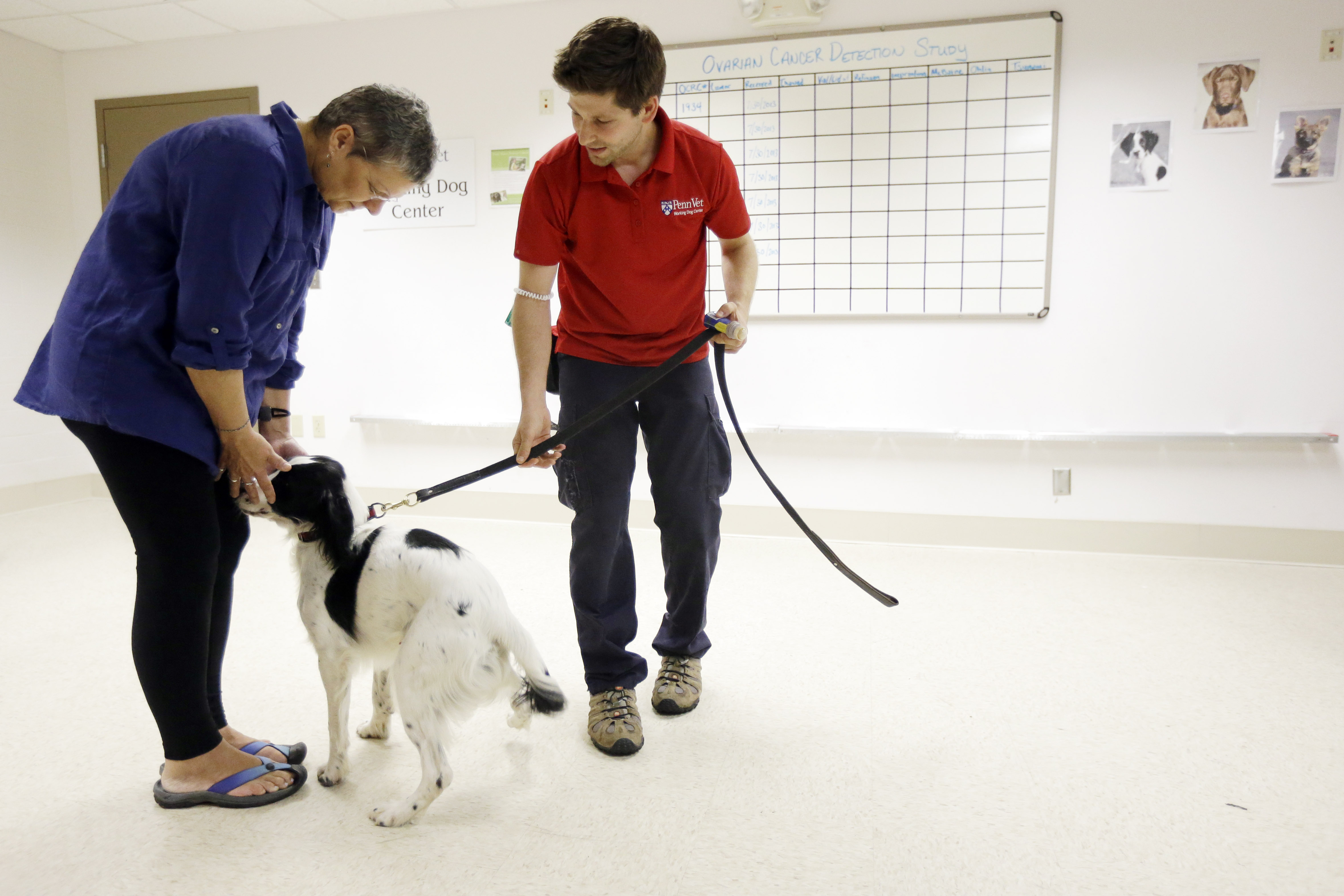 Dogs Help Sniff Out Ovarian Cancer In Pa Study The Boston Globe