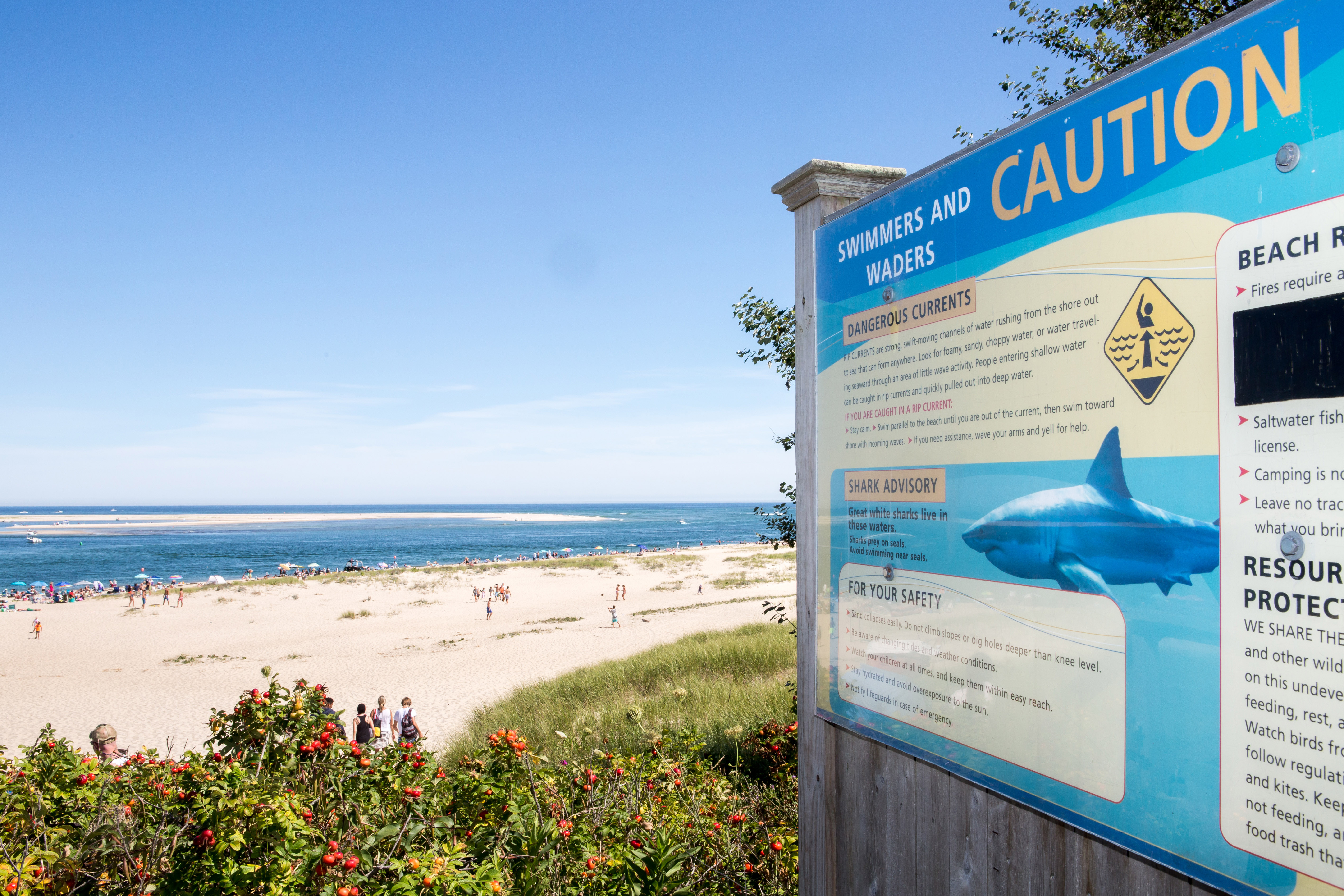 Cape Cod shark alert rise is deceptive — but be careful anyway - Cape Cod Shark Sightings Map on
