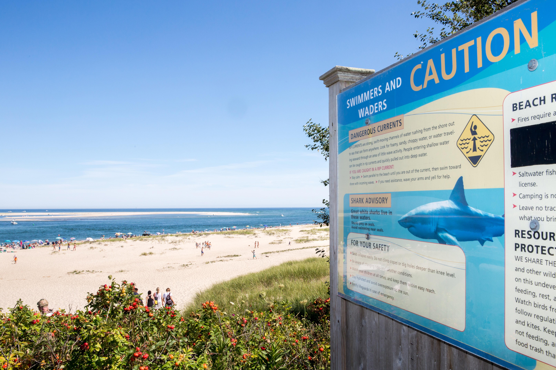 Revere man killed in shark attack at Wellfleet beach - The