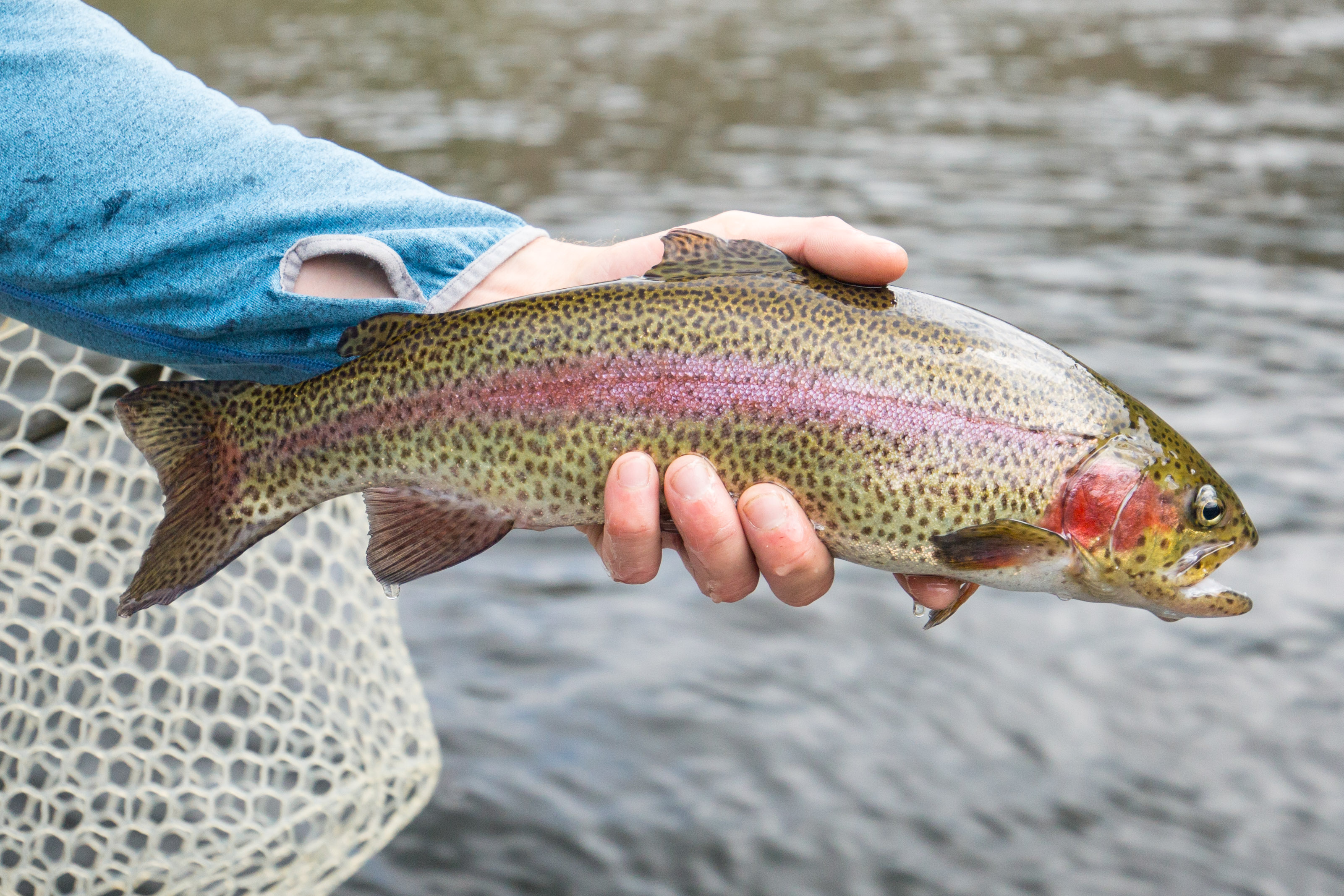 Western fly fishing and bird shooting, close to Boston - The