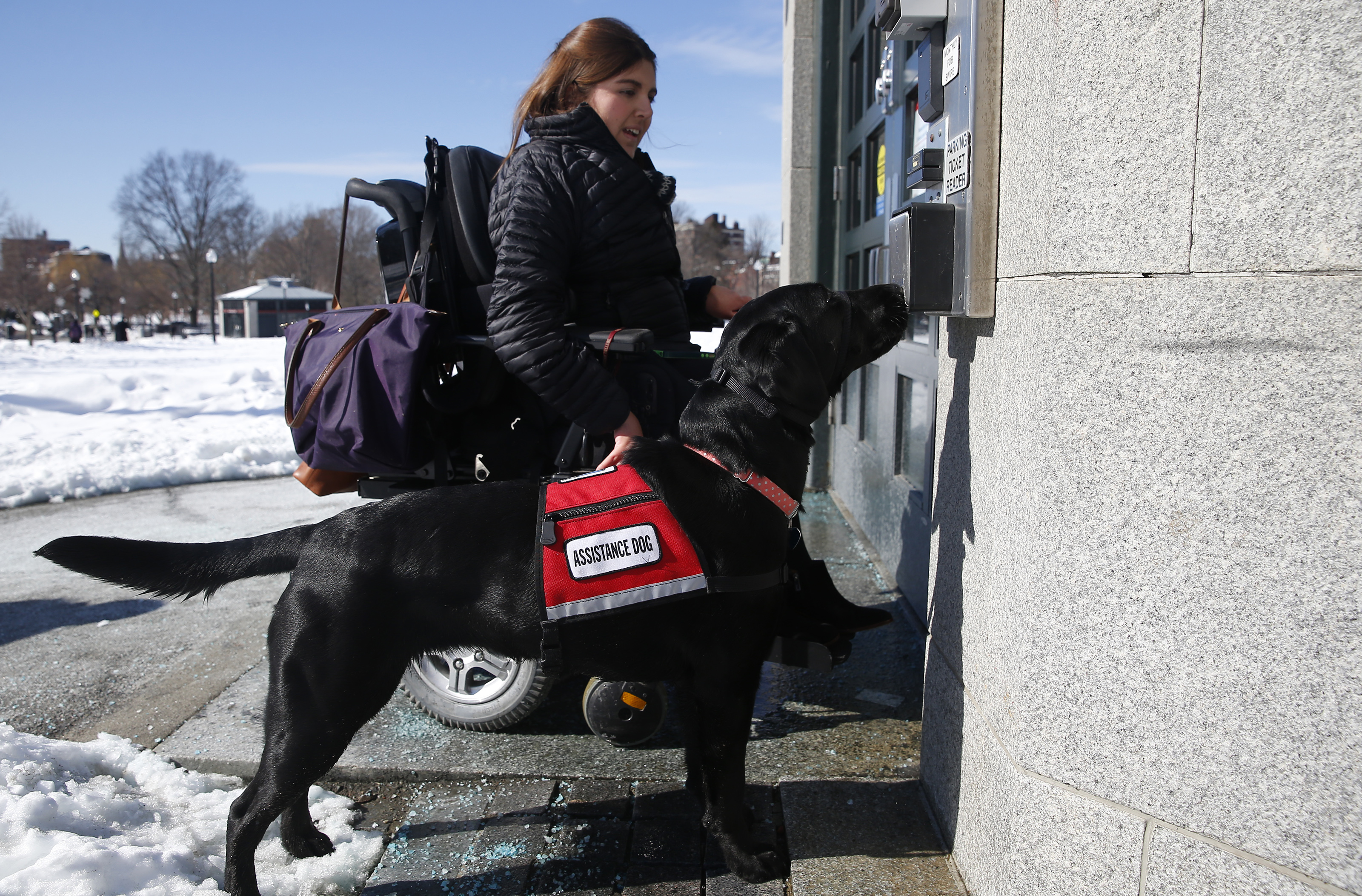 Pretending your pet is a service animal? That could soon be illegal