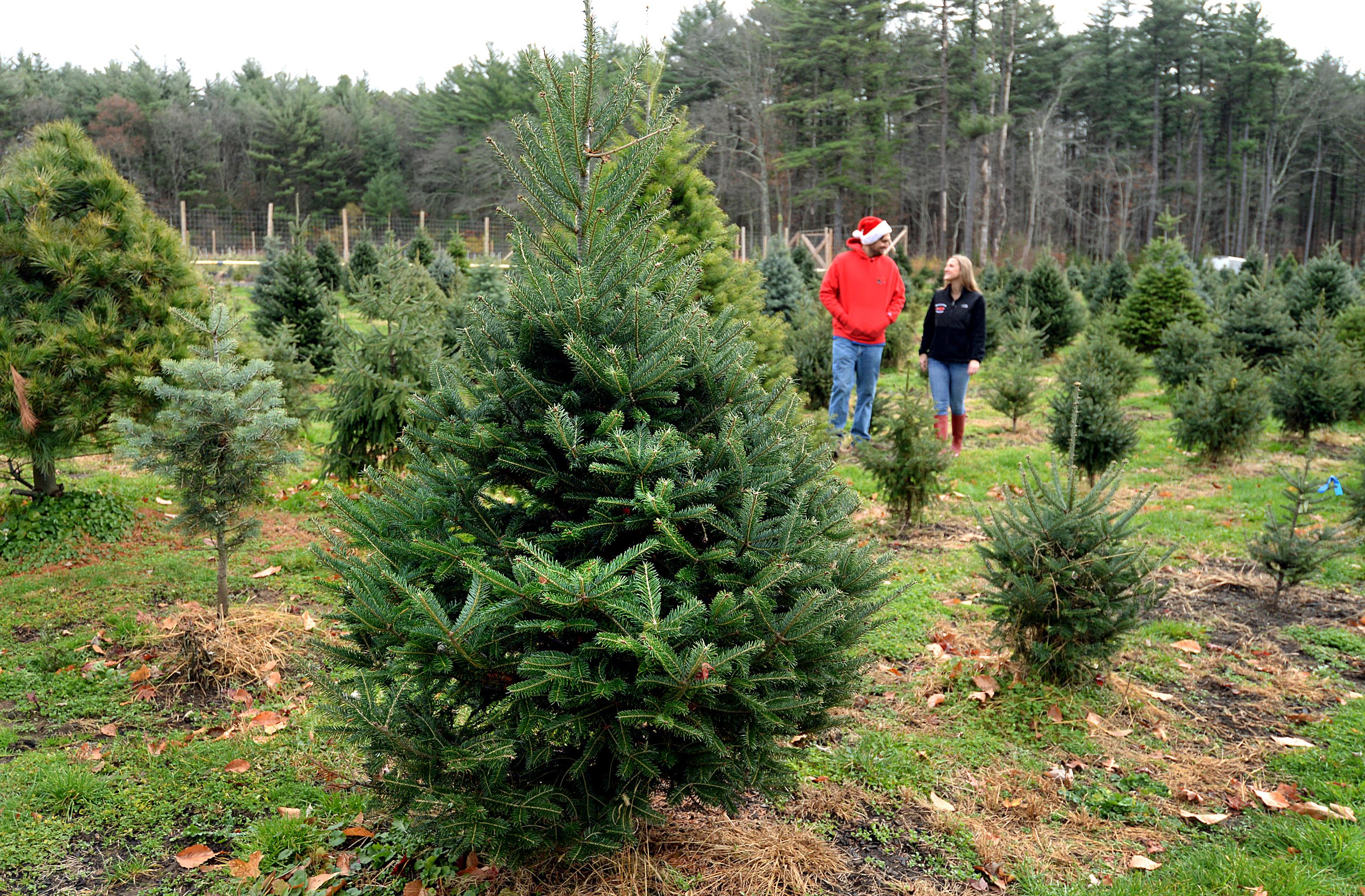 It S A Budding Business Down On The Tree Farm The Boston Globe