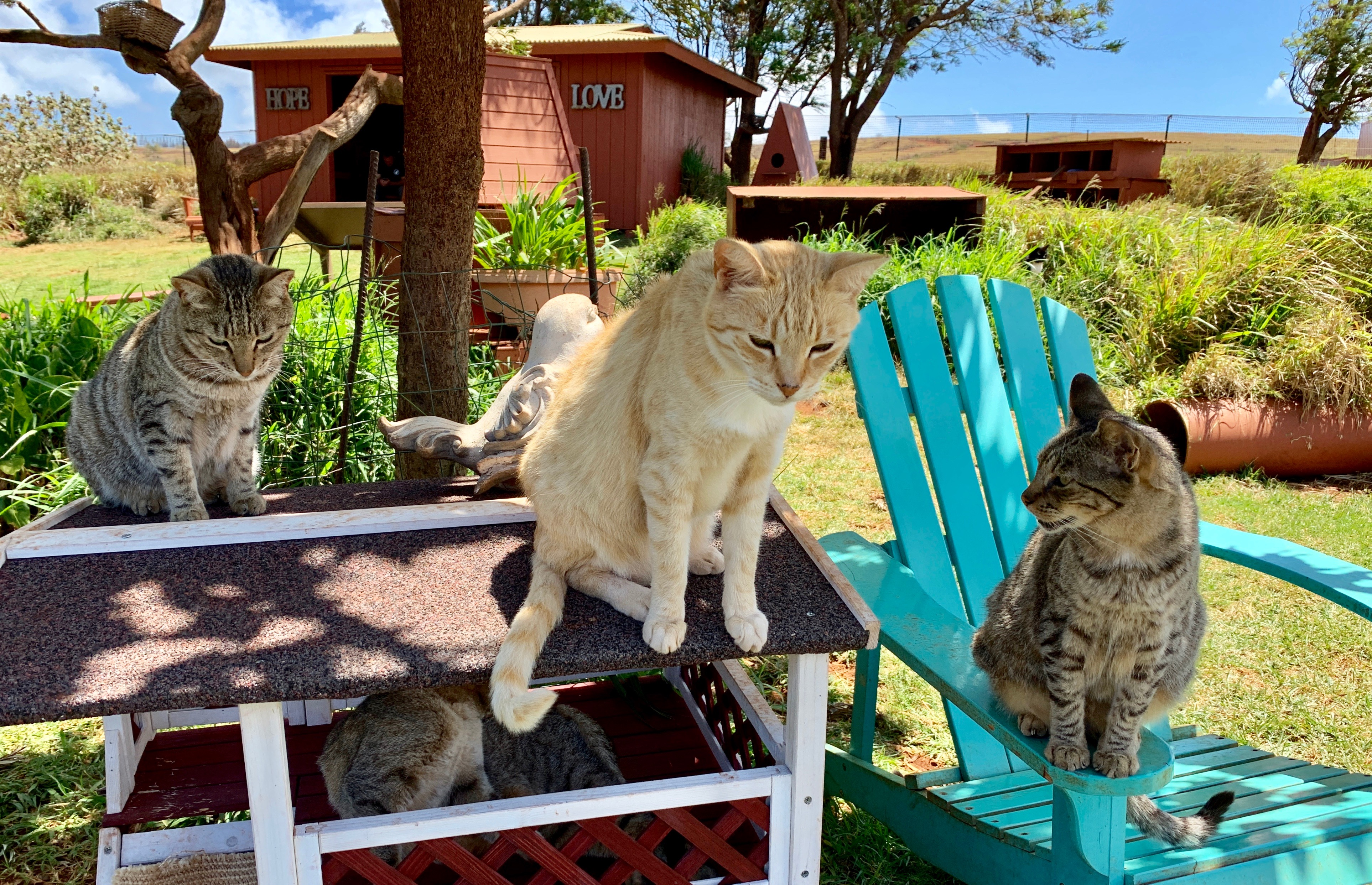 Welcome to Catopia, where more than 600 cats roam, eat, and snooze