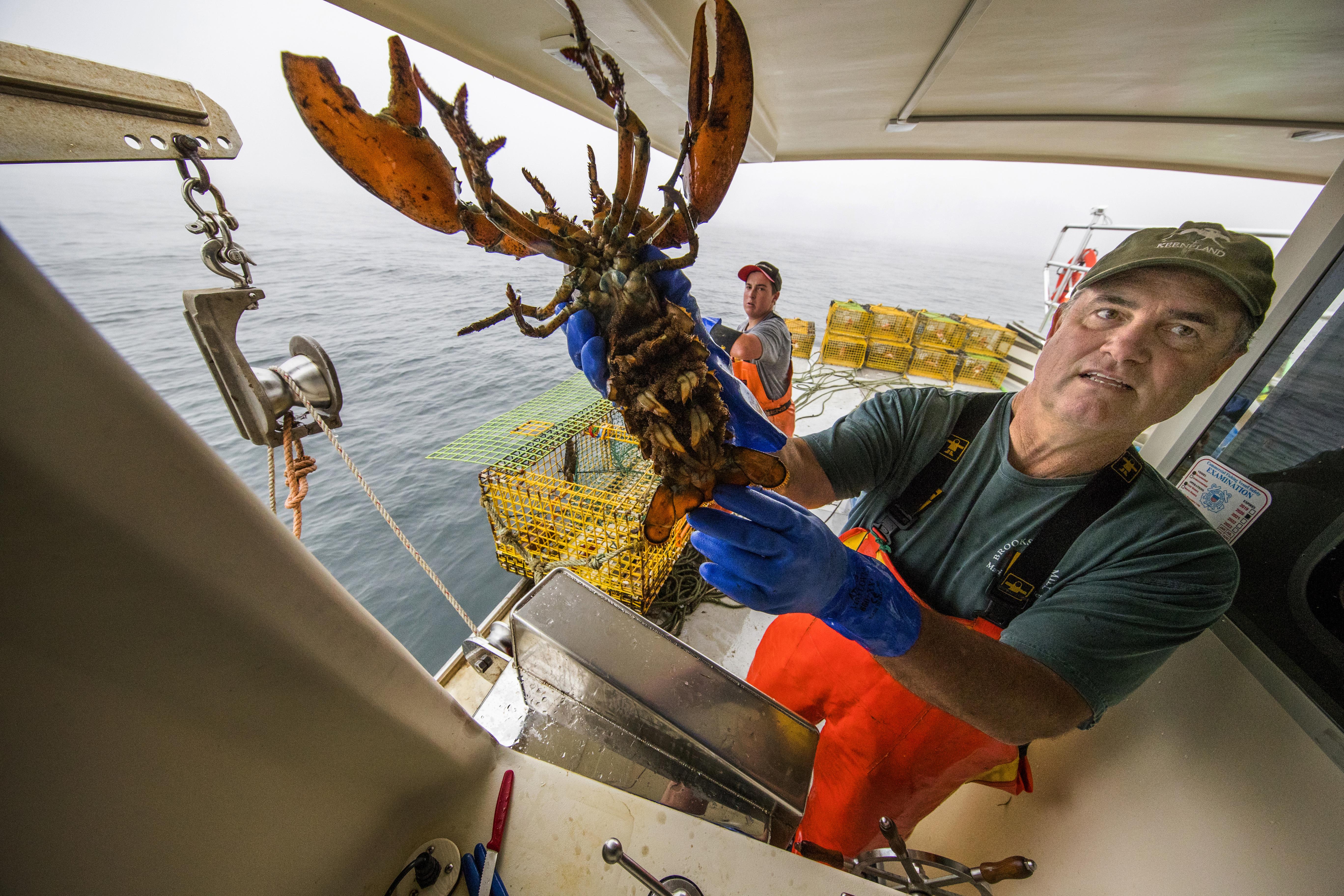 John Farrell goes lobstering